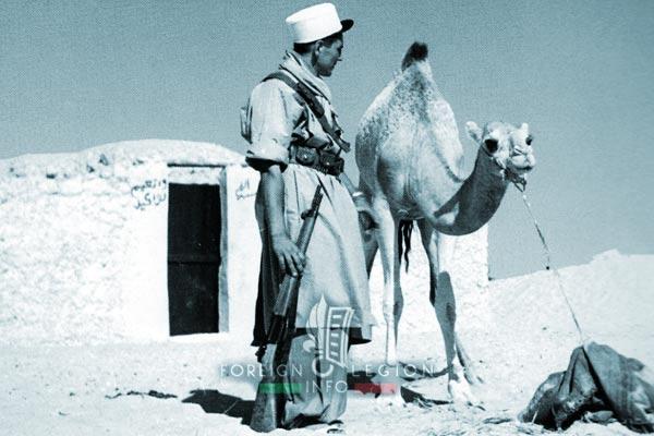 1re CSPL - 1 CSPL - Foreign Legion Etrangere - Sahara - Algeria - Legionnaire + Camel - 1953-54