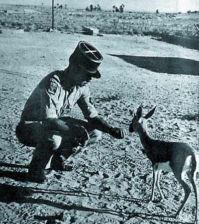 1er ESPL - mascot - Bambi