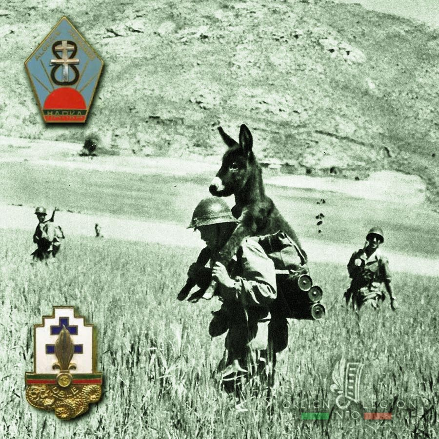 13e DBLE - 13 DBLE - Foreign Legion Etrangere - Bambi - 1958 - Harki - Algeria