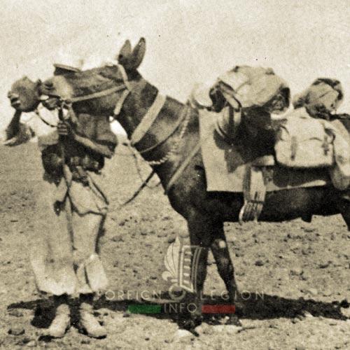 Compagnie montée - Legionnaire - Mulet - Maroc