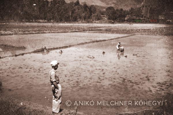 Rice plantation - 4e REI - 4 REI - Madagascar - Foreign Legion - 1949